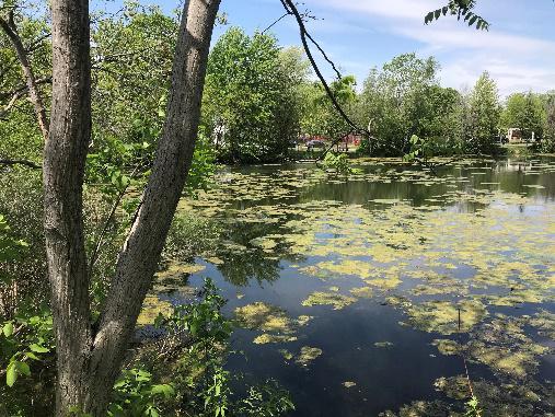 Le point sur les lacs du Village et du Ruisseau…